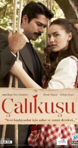 CALIKUSU – LOVEBIRD